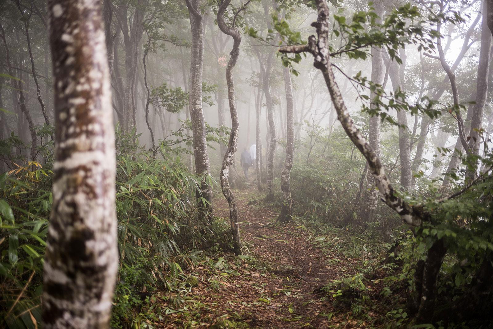Craig Mod — Books and essays on walking, Japan, photography, and publishing