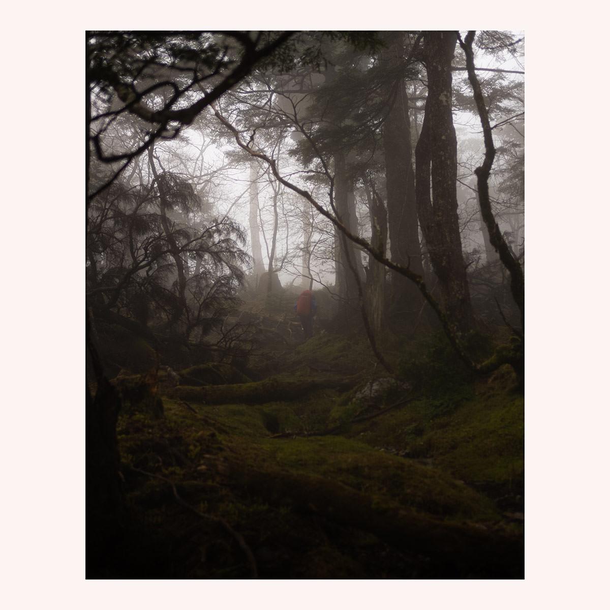 Mist, moss, morning